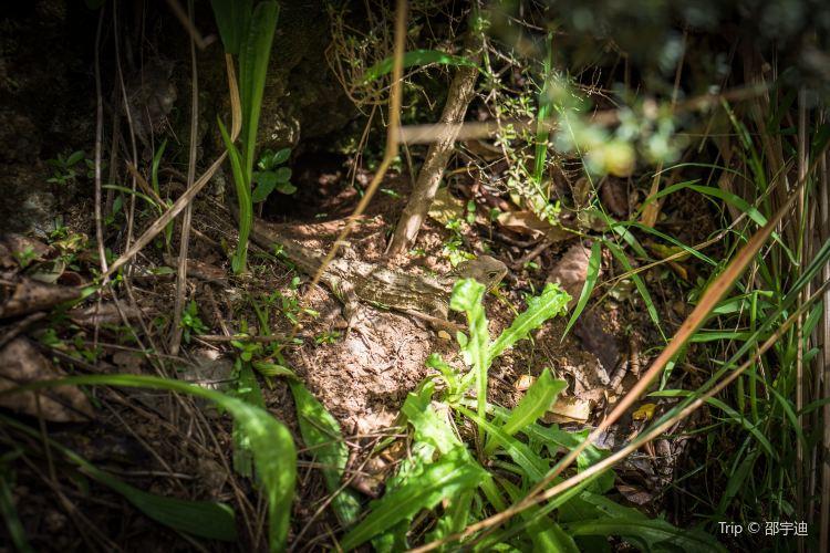 西蘭蒂亞生動植物保護區4