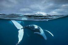 特罗姆瑟观鲸鱼团