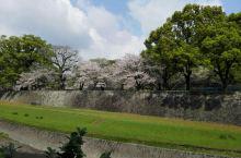 熊本城的樱花还在开放令人意外惊喜6