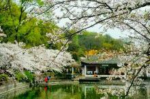 #无锡太湖鼋头渚公园樱花#  鼋头渚公园是无锡第一胜景,是无锡所有公园中的佼佼者。鼋头渚公园现有充山