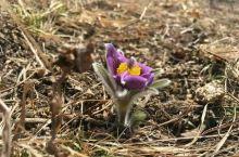 寻找春天的气息