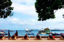 桑给巴尔的海边,许多流浪猫在悠闲的晒着太阳。坐船半个小时,就到对面的监狱岛。岛上生活着100多只象龟