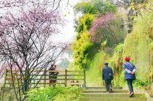 重庆记忆之.山城步道