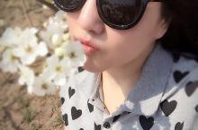 十里桃花&梨花