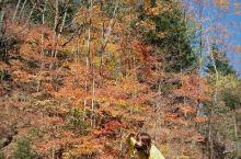 希望自己做一枚树上的秋叶,摇曳在季节的轮回里,不卑不亢,荣辱