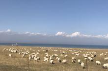 青海湖秋色