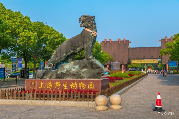 上海野生動物園4