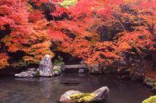 洛北归来不看枫,京都的秋景一样可以人少景美