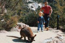 塔斯马尼亚 | 袋鼠叫早服务 企鹅陪你散步 袋熊与你卖萌