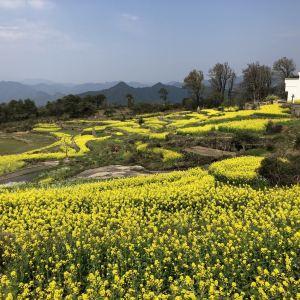阆山村旅游景点攻略图