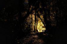此观景点是一条环形步道,走完一圈大约30分钟,就在小镇上,很方便可以到达,但是入夜以后才能看到萤火虫