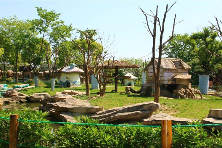 Yancheng Wild Animal World4