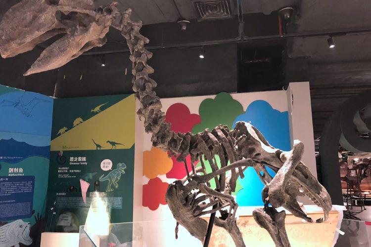 Zhengjia Natural Science Museum4