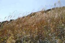 风吹芦苇,大自然欢快音乐(福建双髻山)音