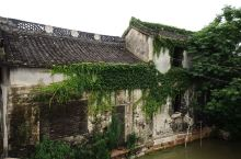 杨桥古镇小河绕村而过,垂柳拂岸,一派和谐的田园风光,这个夏天最适合在这里度过。  古镇的爷爷们在午后