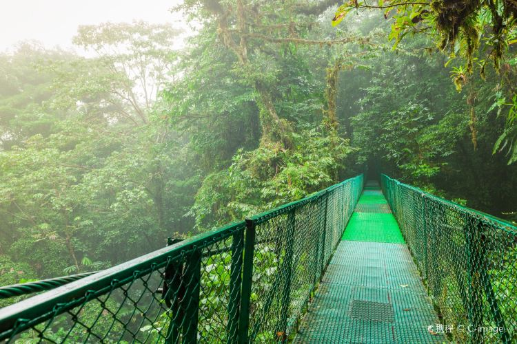 Monteverde Cloud Forest Biological Preserve4
