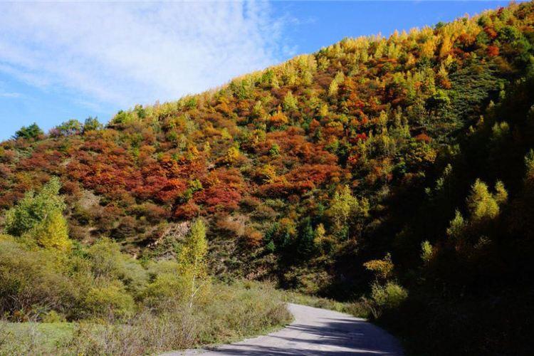 冶力關國家森林公園3