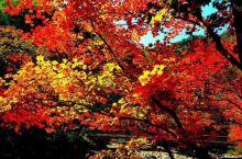 本溪的枫叶红了