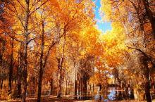10月,就去看胡杨吧 l 与秋天的邂逅,就在远方绚烂的胡杨林