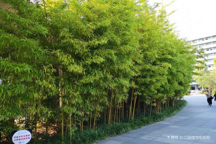 Anji Bamboo Expo Park3