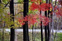 蛟河红叶 蛟河红叶谷是长白山余脉老爷岭的一条山谷,位于拉法山国家森林公园的庆岭风景区,这里山势俊秀,