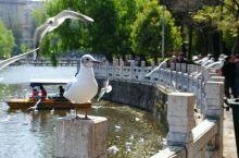 翠湖公园,冬天观赏红嘴鸥的最佳地点
