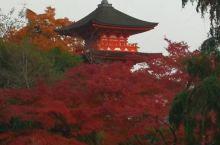 日本京都清水寺的红叶🍁美翻了