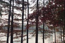 冬天的烈士公园到处都是红枫和金黄的银杏!