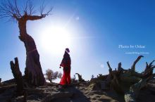 吊打纳米比亚死亡谷的国内景点,额济纳旗怪树林