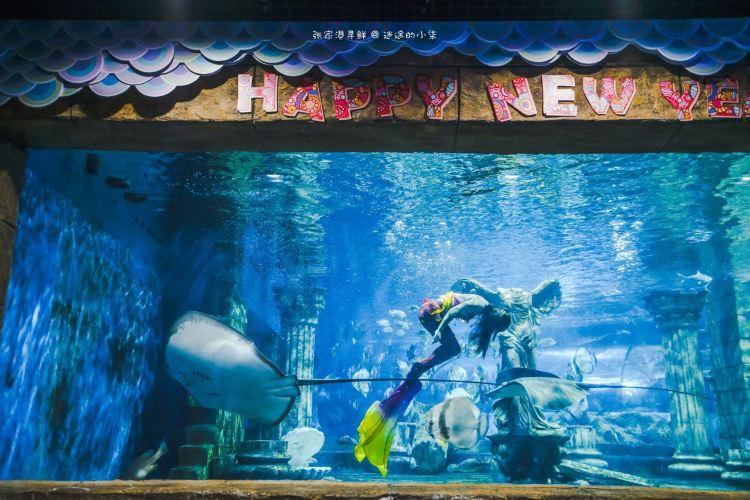Zhangjiagang Dream Ocean Kingdom4