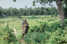 在奇特旺与大象亲密接触 #向往的生活