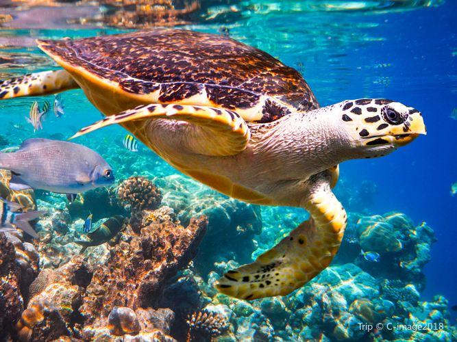 Underwater World Langkawi1