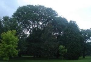 爱德华花园旅游景点攻略图