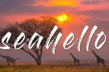 为什么看动物大迁徙要去坦桑尼亚而不是肯尼亚?