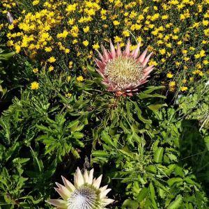 康斯坦博西植物园旅游景点攻略图