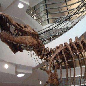 University of California Museum of Paleontology旅游景点攻略图