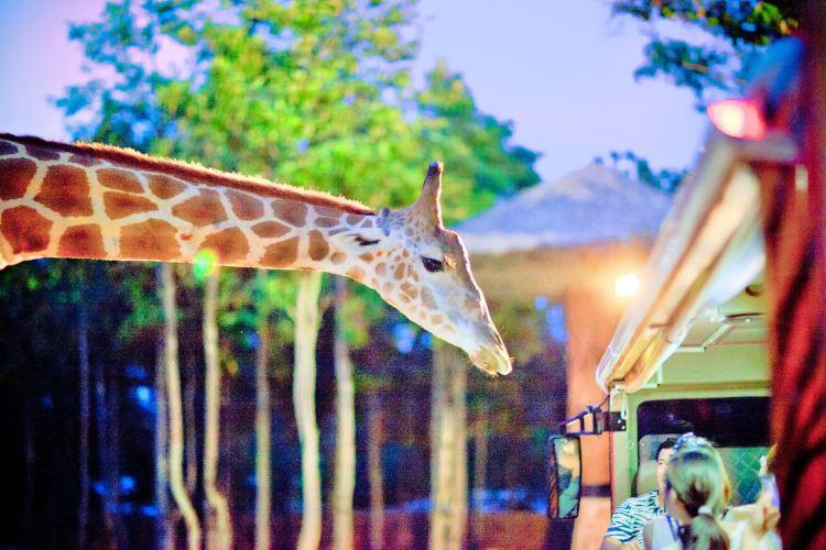 치앙마이 야간동물원