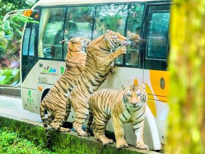 Bifengxia Wildlife Park