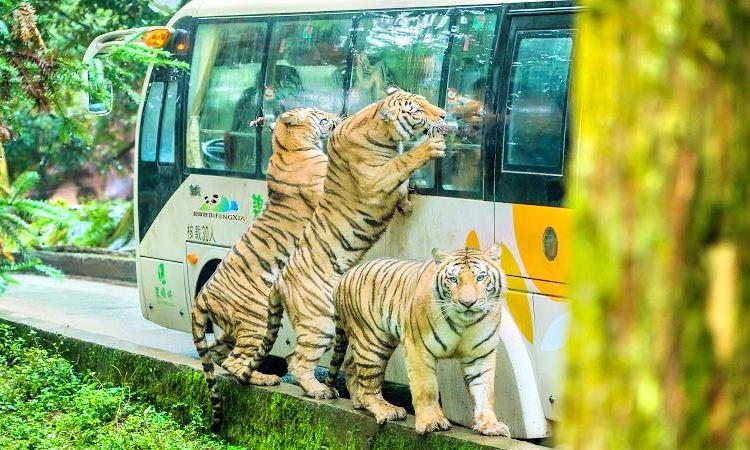 碧峰峽野生動物園