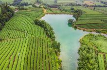 中国最大规模的茶园在哪里,估计你猜不到,是在浙江丽水的松阳县