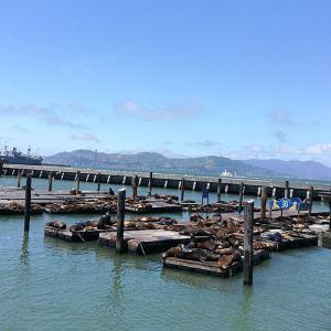 旧金山旅游景点攻略图
