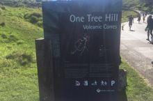 奥克兰One tree hill