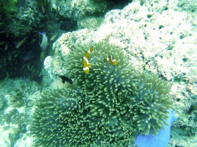 獨孤遊記:神祕馬達京,美麗仙本那,與海龜同遊,完美的浮潛之旅