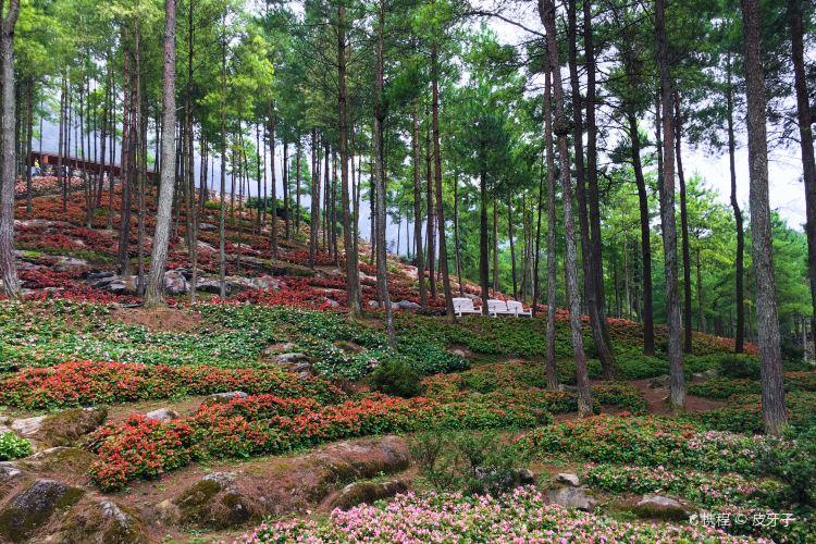 大木林下花園1