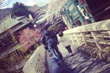 櫻花時節,溫柔的箱根