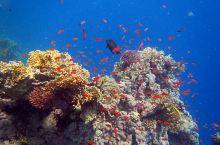 红海的珊瑚鱼 埃及红海不愧为是潜水圣地之一