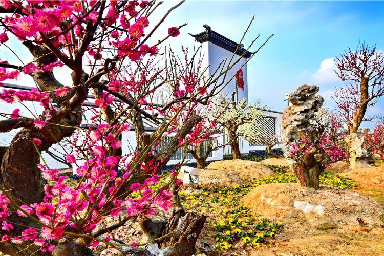Meihuawan Scenic Spot3