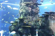 水菱环球之旅の新加坡海洋馆