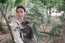 布里斯班 与考拉袋鼠的奇遇