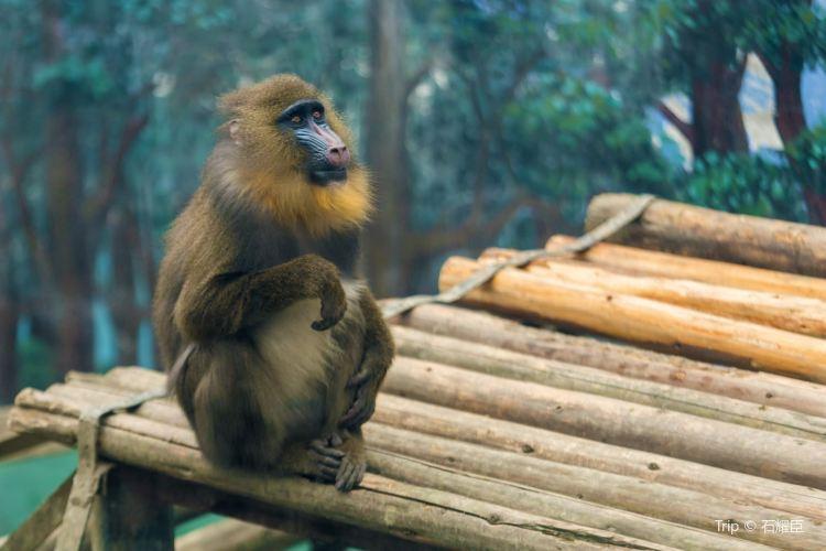 청두 동물원(성도 동물원)1